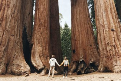 Diminutos entre Sequoias