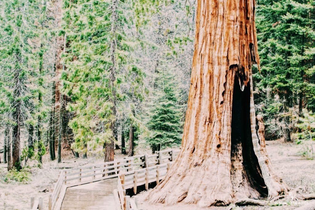 Pasarelas por el Bosque Gigante. Parque Nacional de las Secuoyas
