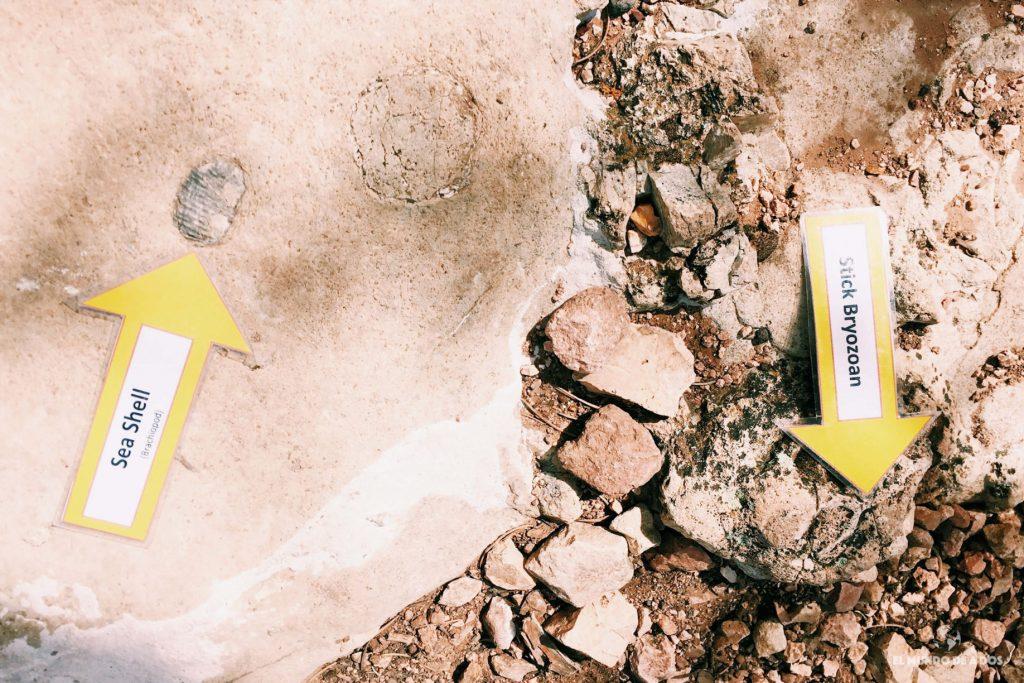 Fósiles en el Gran Cañón. Gran Cañón en un día