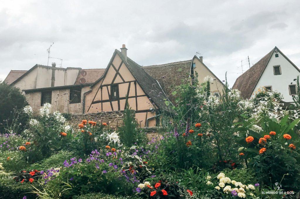 Flores de Eguisheim. Eguisheim Francia
