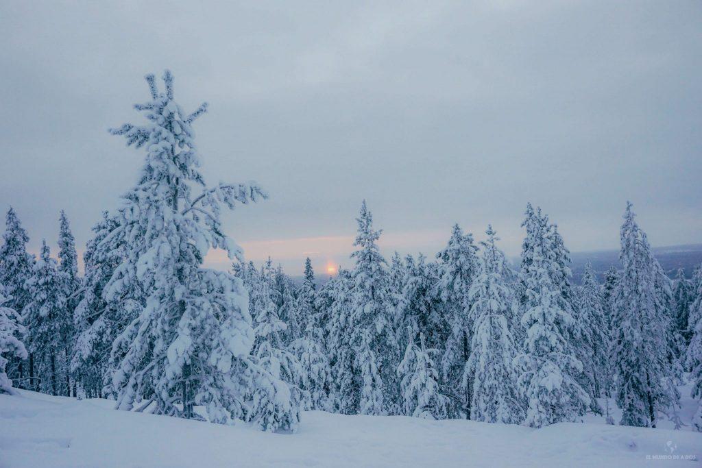 Bosque helado. Que ver en Laponia en invierno.