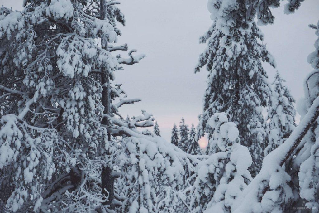 Amanecer nevado. Viajar a Laponia en invierno