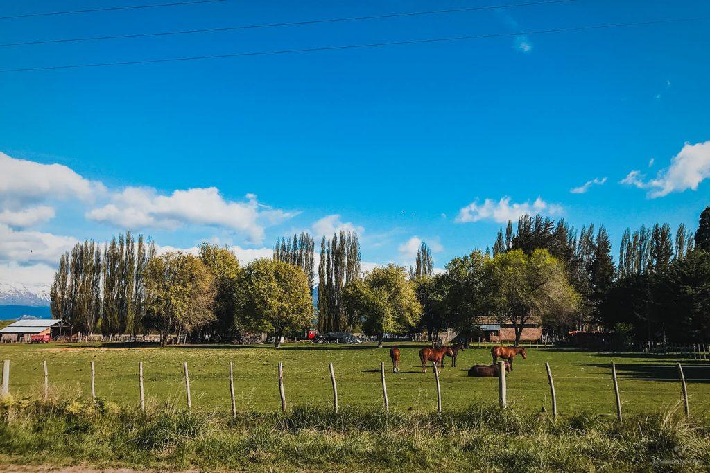 Granjas en Trevelin