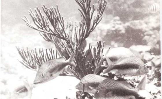 Sonidos que emiten los peces