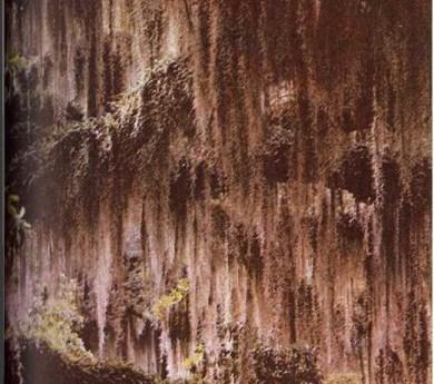 Plantas que viven en los árboles