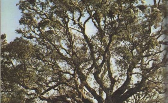 El coto de Doñana, donde se citan las aves