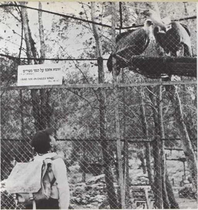 Parques zoológicos