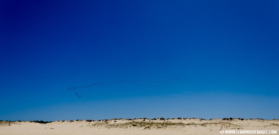 Playas del Alentejo - Aves migratorias de la laguna de San Andrés
