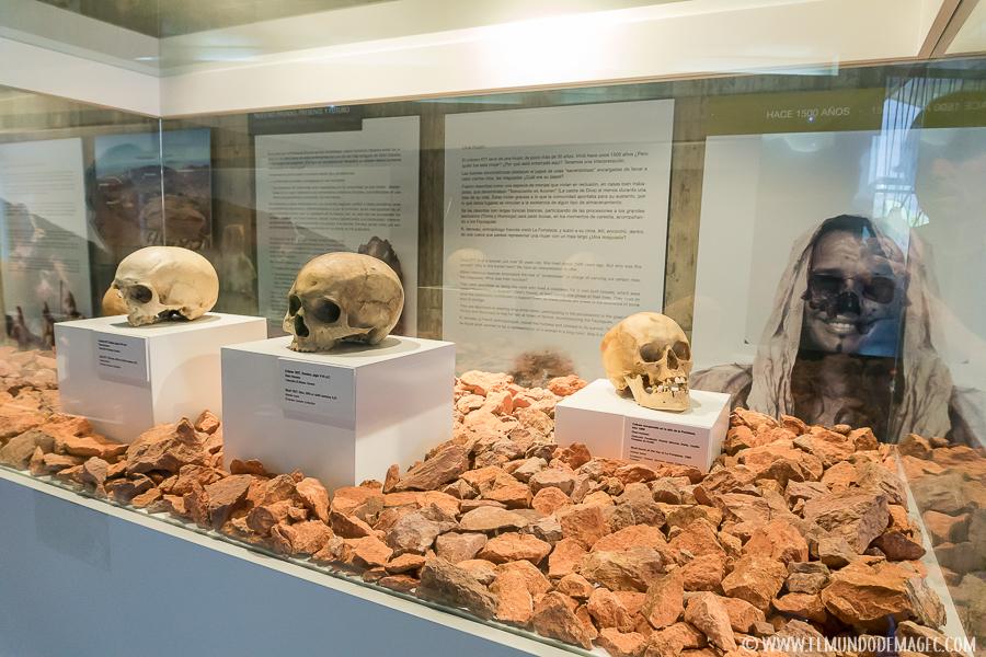 Cráneos rescatados en las excavaciones