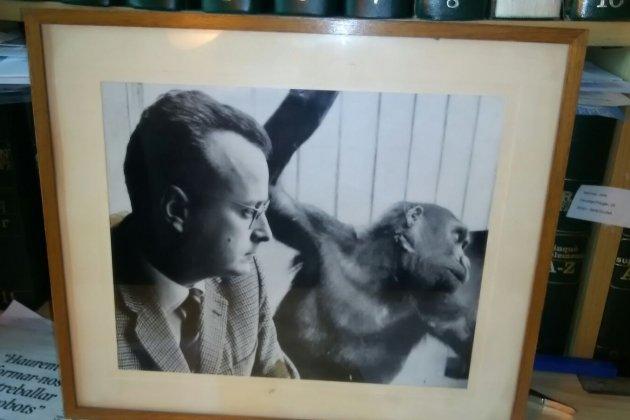 Joaquim Carbó Orangutans