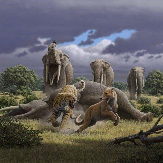 escena machairodus magericyon color de la muestra i sables y mastodontes i (1)