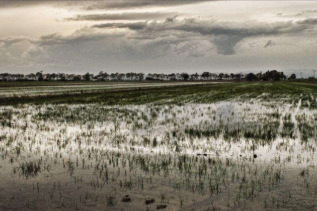 Arrozal Delta del Ebro wikipedia