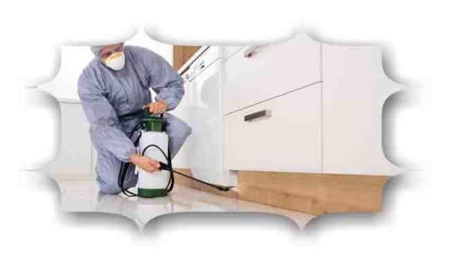 شركة مكافحة حشرات المنزل بالدمام