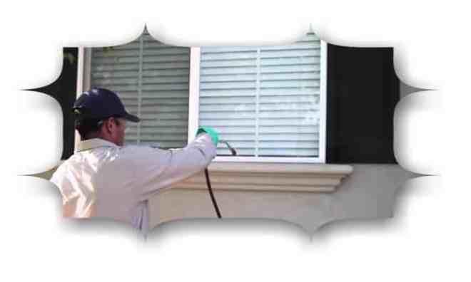 شركة مكافحة حشرات الفلل بالدمام