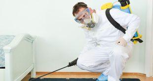 شركة مكافحة حشرات الفلل والبيوت بالدمام
