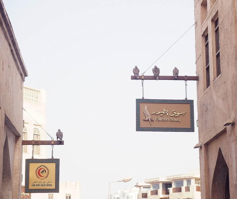 falcon hospital-falcon shop