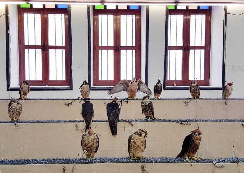 falcons shop