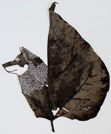 141218 el lobo feroz 44 x 34 cm especie catalpa bignonioides Tombent les feuilles