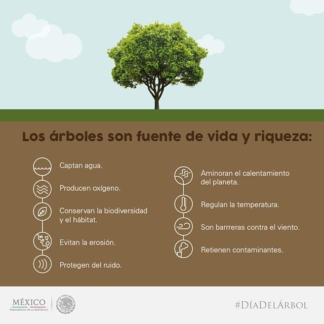 Resultado de imagen para deforestacion infografia