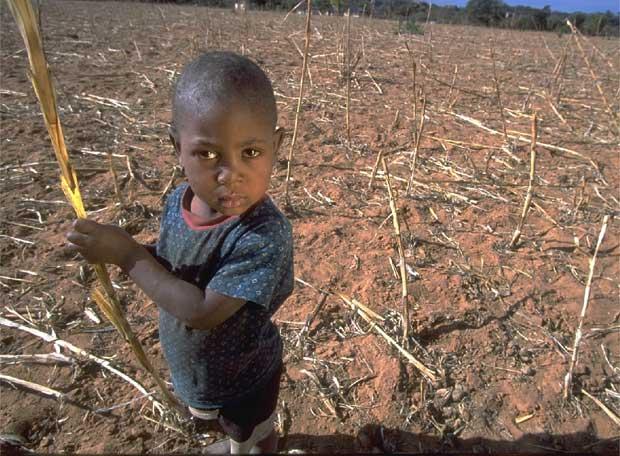 Ayanda, un niño de 4 años, sostiene una mazorca de maíz en un campo seco en Zimbabue