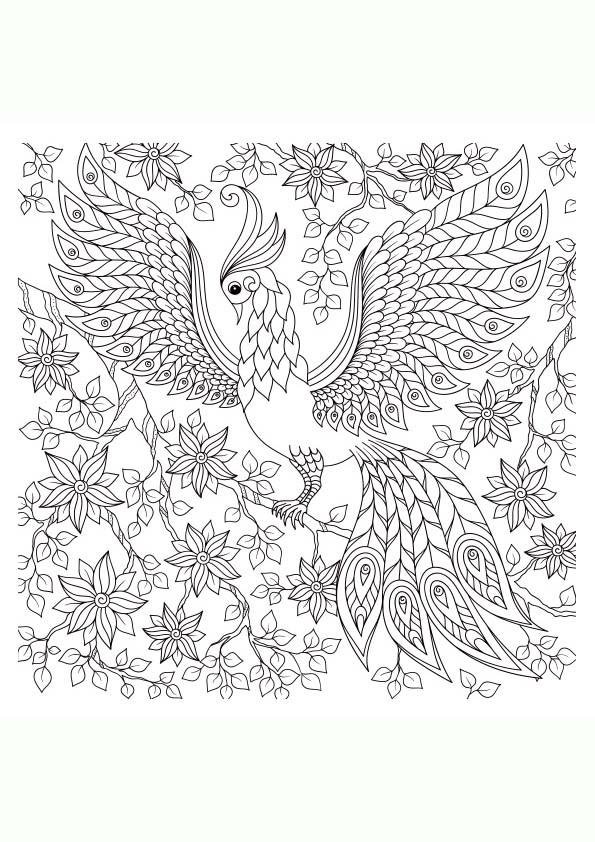 Dibujos Animales Reales Para Colorear Dibujos De Animales