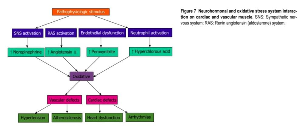 Neurohormonal and Oxidative Stress System Interaction