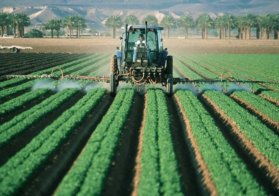 GM Crops: The  Limitations, Risks, And Alternatives