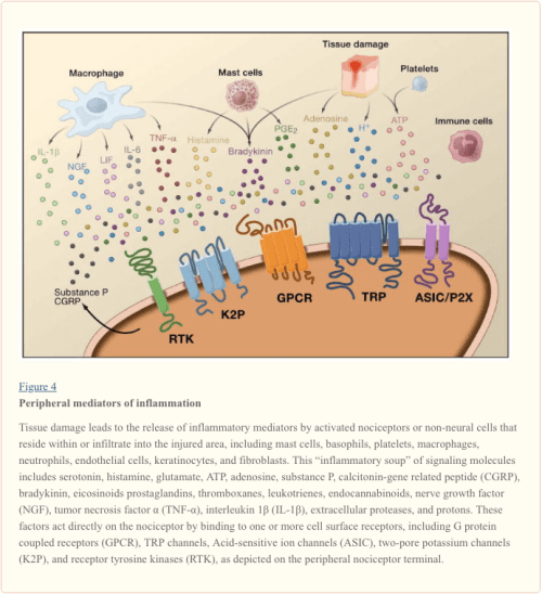 Figure 4 Peripheral Mediators of Inflammation