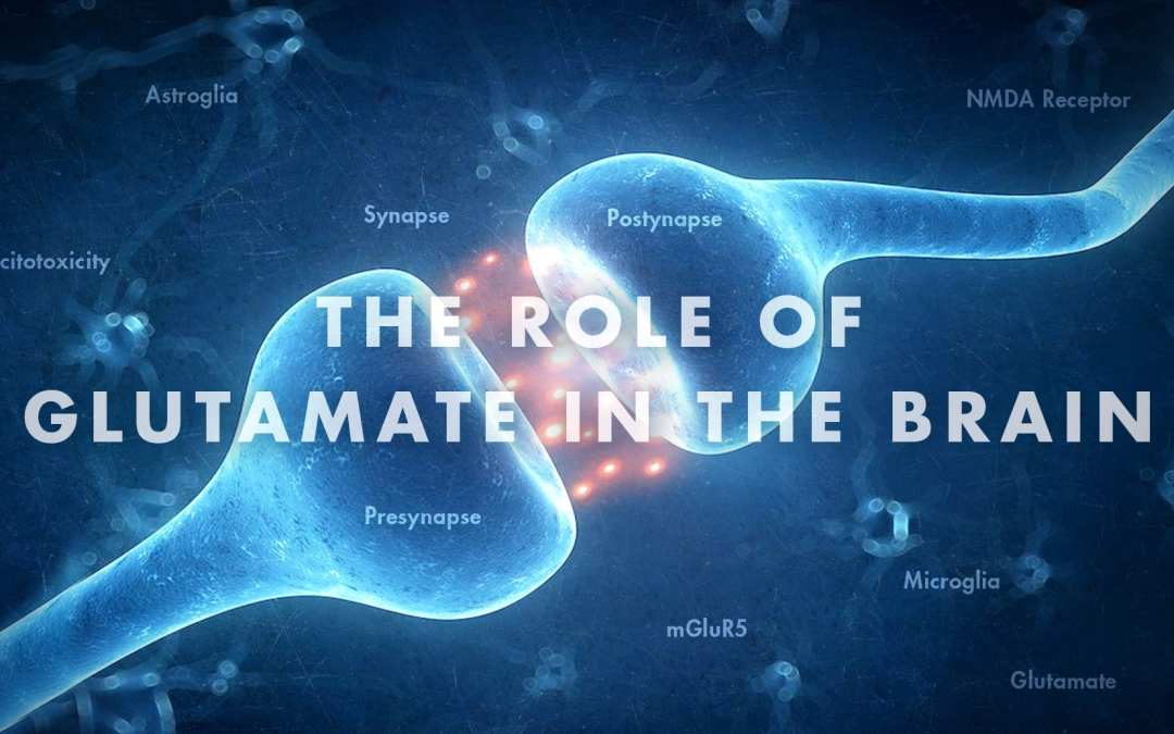 Functional Neurology: The Role of Glutamate in the Brain