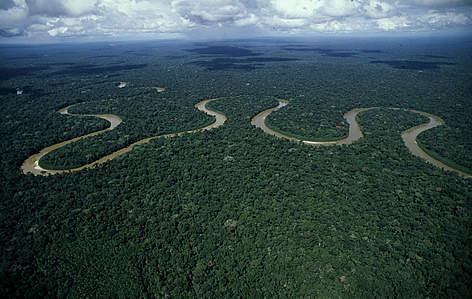 ¿El bosque más grande del planeta es el Amazonas?