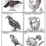 OMAR: Aviario