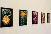 """Lucero explica que imprimió las fotografías en tela ecológica """"por un tema de responsabilidad con el entorno"""", arguye."""