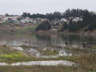 La laguna El Ancho postula para convertirse en Humedal Urbano Protegido y así salvaguardar ese hábitat.