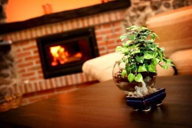Detalle del bonsay y la chimenea