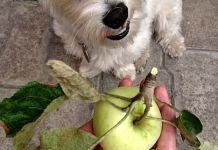 Dieta Canina