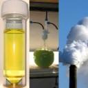 fuels-of-the-future-urine-algae-co2