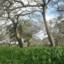 Agroforestry in Africa