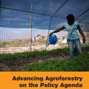 FAO report on Agroforestry