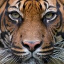 WWF : Stop Wildlife CrimeWWF : Stop Wildlife Crime