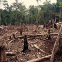 Deforestation of the Amazon increases