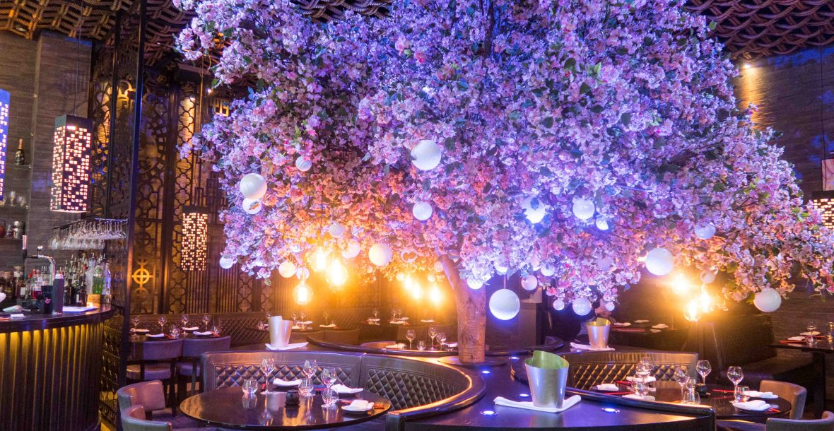 The famous cherry blossom tree at Tattu