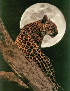 sendero del jaguar