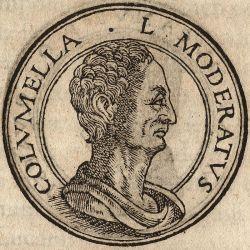 Retrato de Lucio Junio Moderato Columella de Jean de Tournes , Insignium icones virorum alícuota , Lyon , 1559