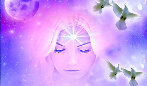 Palomas meditación blanca