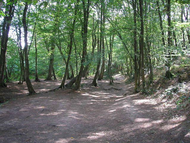 800px-Forêt_de_brocéliande
