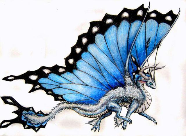 Mariposa-Dragon