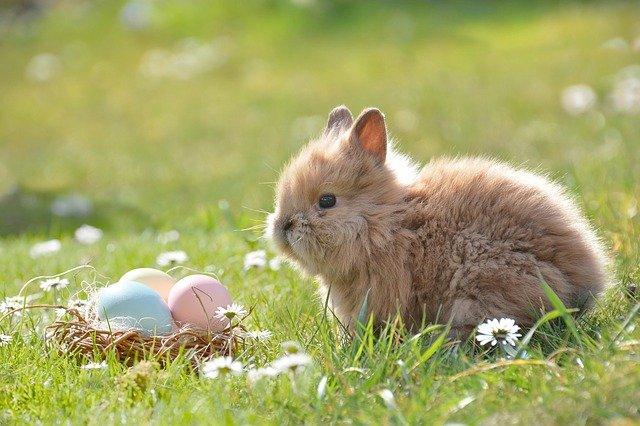 La Tradición de los Huevos Decorados