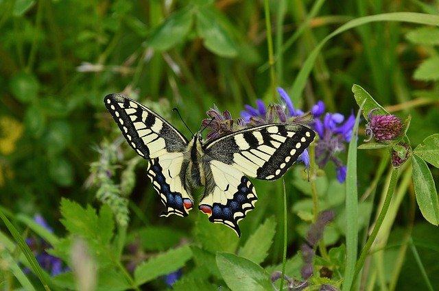 Meditación Contemplativa: Conexión con la Naturaleza