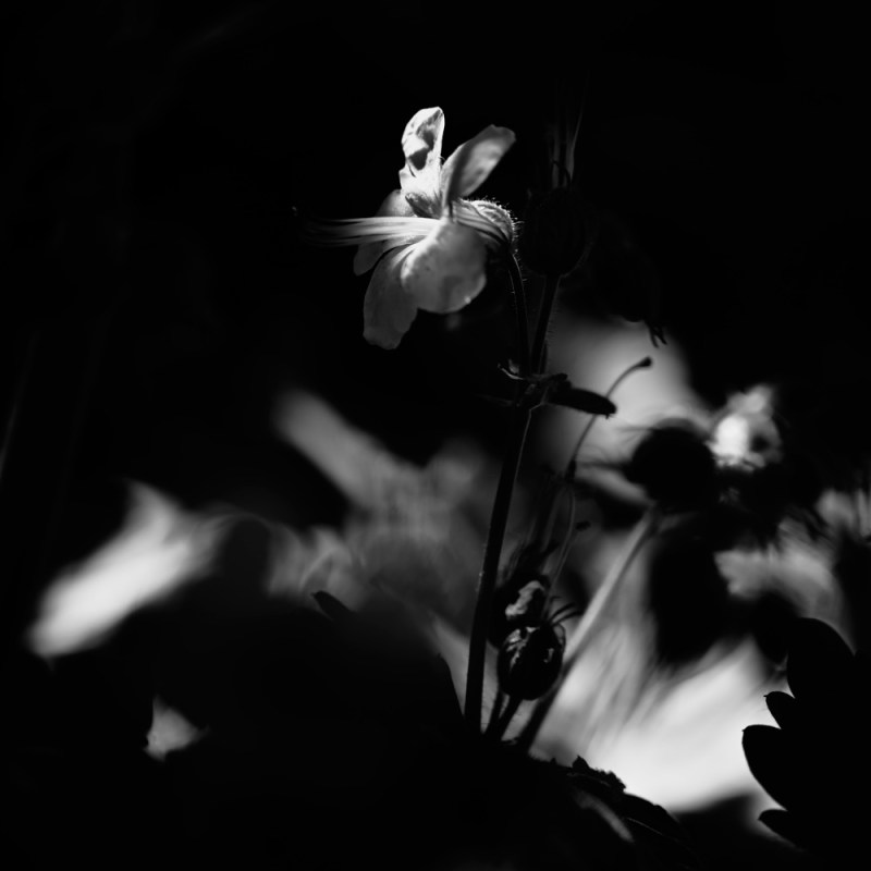 Corona 20.6 | Elsbeth Bauer