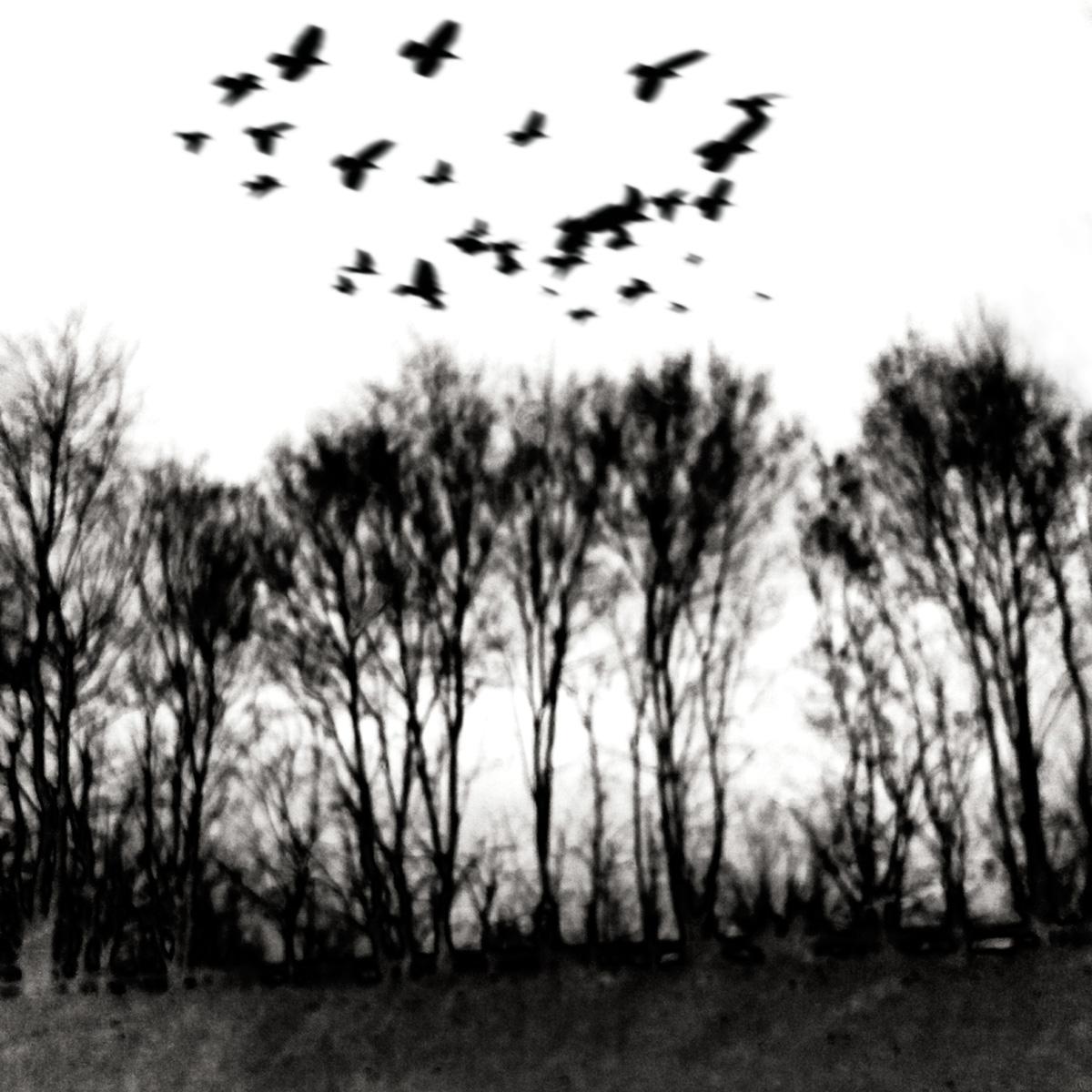 Bäume im Nebel 17.1